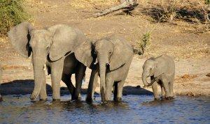 elefántok a folyónál